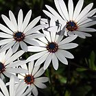 push the little daisies and make em come up by Rae Stanton