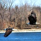 Eagles in Flight by Brad Sumner