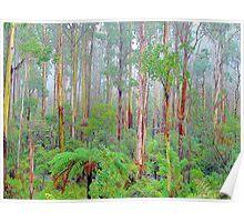 Lifes a Beech - Marysville , Yarra Ranges National Park Victoria Australia Poster