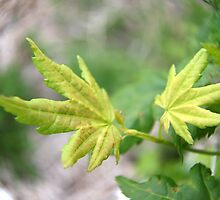 Fresh Green by coffeebean