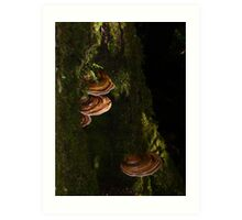 tree fungi - at Waratah (lots of these saucer-like protrusions in the rainforests here) Art Print