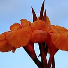 Canna Lily by Sharon Perrett