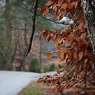 Mountain Road. by Linda Eades Blackburn