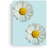 Two white daisies Canvas Print