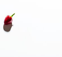 Lonely chilli  by chrisdot