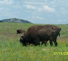 Bison by kostic
