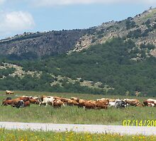 Longhorns by kostic