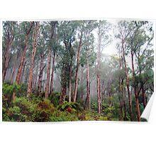 Soldiers In The Mist - Marysville , Yarra Ranges National Park Victoria Australia Poster