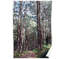 Rainforest Walk -  Yarra Ranges National Park ,Marysville, Victoria Australia Poster