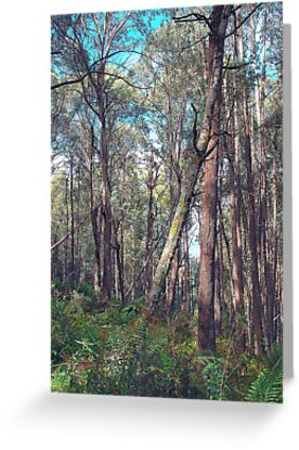 """Lean On Me"" - Yarra Ranges National Park , Marysville Victoria Australia by Philip Johnson"