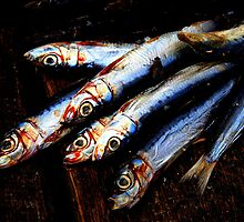 Pilchards by Andrew Edgar