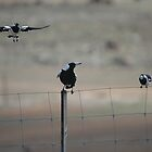Peewees & Magpie by muz2142