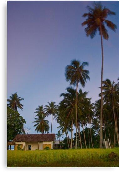Unawatuna - Sri Lanka by Adrian Rachele