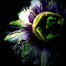 Passion fruit flower by sparrowdk