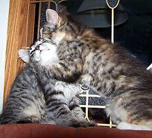 kitty secrets by tomcat2170