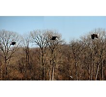 Flight of the Eagle Photographic Print