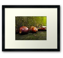 Squirrel Food Framed Print