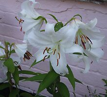 Lilies by jeanmarie