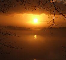 Golden Mist  by Paul Gibbons