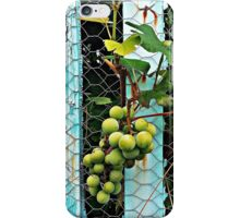 Backyard Vineyard  iPhone Case/Skin