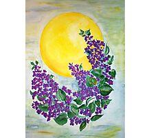 Midsummernight lilacs Photographic Print