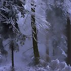 Magical, foggy Forest..........December 2014 by Imi Koetz