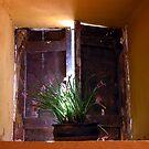 Urubamba Window by Lucy Hollis