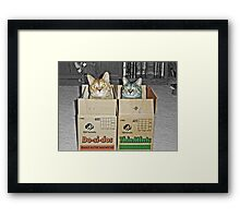 Free Shipping Framed Print