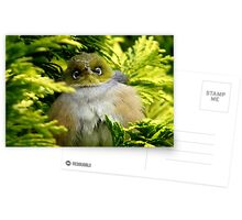 I'm Camouflaged In A Web!  - Silvereye - Wax Eye - New Zealand Postcards