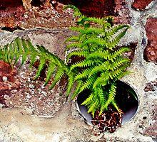 Fern in sandstone wall by rayemond