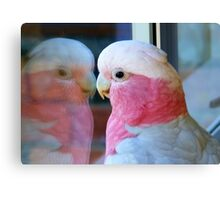 Mirror Mirror on the wall... Galah - NZ - Southland Canvas Print