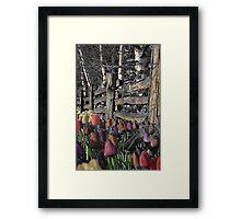 Skagit Tulips Framed Print