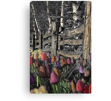 Skagit Tulips Canvas Print