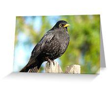 I'm An AllBlack!! - Blackbird - NZ Greeting Card
