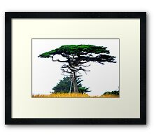 'Just A Little Support' - California Coast - USA 2008 Framed Print