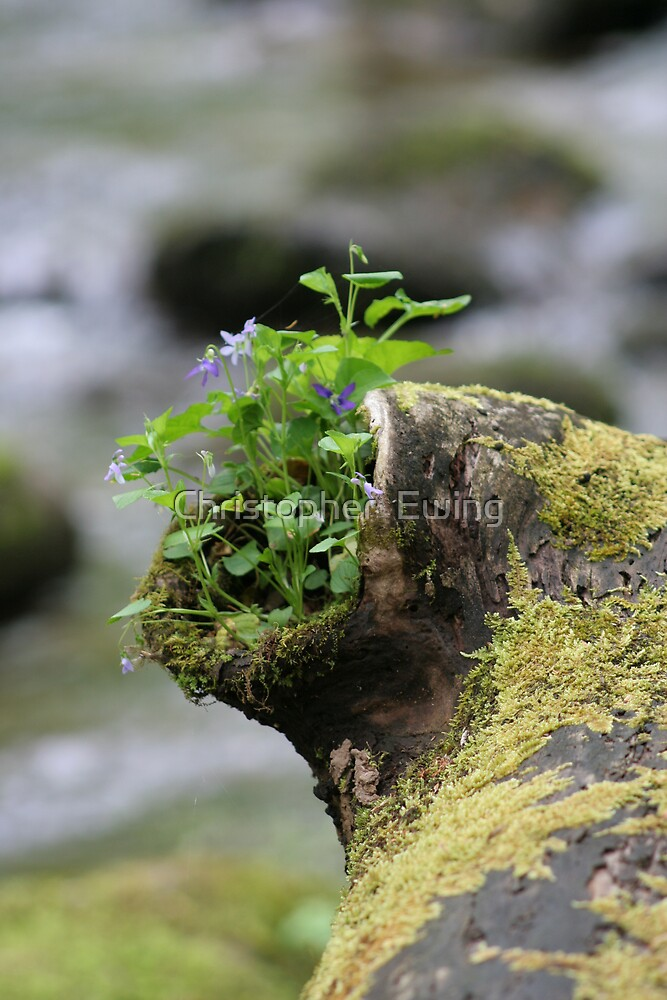 nature's flowerbox by Christopher  Ewing