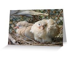 Bob... I Can't Wait To Grow Up!! - Baby Collard Doves - NZ Greeting Card