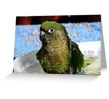Surf's Up! - Maroon Bellied Conure - NZ Greeting Card