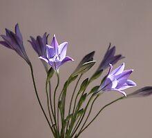 Summer blue 3 by Annie Finn