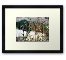 Dried out Framed Print