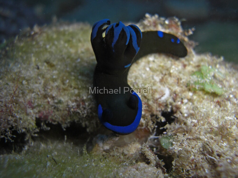 Ninja Nudi by Michael Powell
