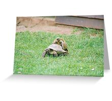Tortoise Love Greeting Card