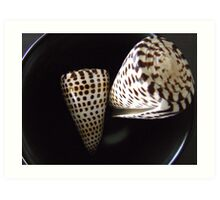 Spotted Turban Cone Shell Art Print