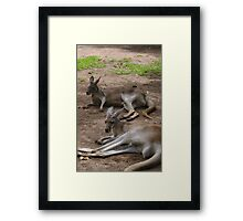 Lazy Roos Framed Print