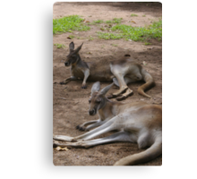 Lazy Roos Canvas Print