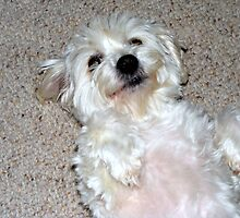 Will you please rub my tummy! by Maximus