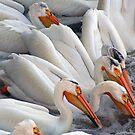 Pelicans by Teresa Zieba