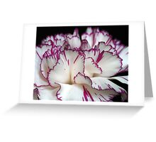 Carnation... Greeting Card