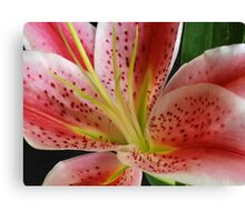 Lily... Canvas Print