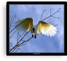 Cockatoo... Canvas Print
